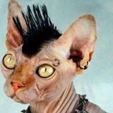 Рисунок профиля (Иван Потапов)
